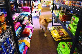 How to Find the Best Dry Dog Food: Behind <i>The Whole Dog Journal</i>'s Approved Dry Dog Food List