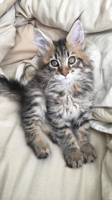 Park Art|My WordPress Blog_Maine Coon Kittens Available Near Me