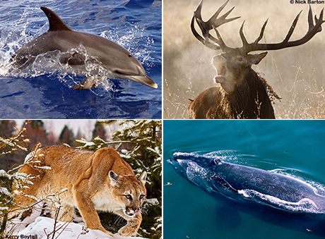 Monumental action needed to save wildlife