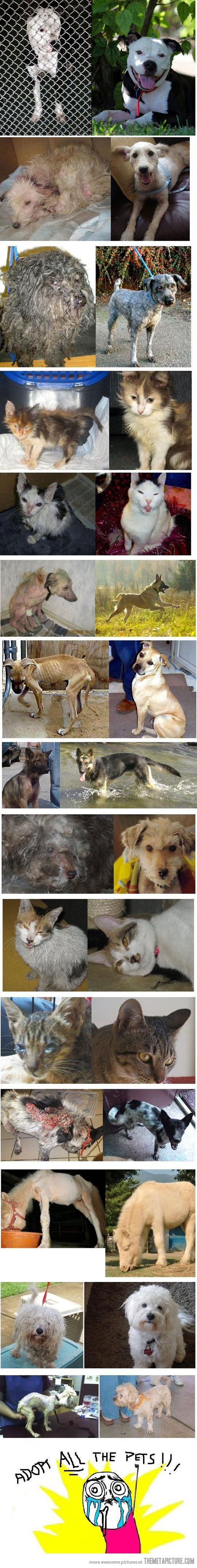 Rescued animals, before and after shots. Please give shelter animals the forever home they deserve.