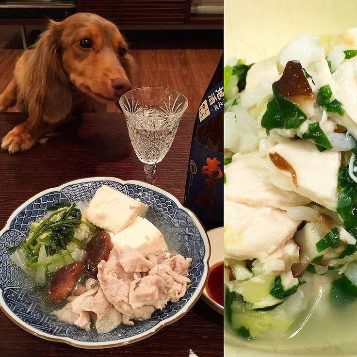 Smells Japanese sake tonight! . ピノは日本酒に興味あり 今夜は今後の一家ごはんローテーションも考えて手羽元茹でてからそのスープ使った豚しゃぶ一家のごはんは今朝茹でたササミとおばばと同じ野菜&白米 . #犬 #ダックス #ダックスフンド#短足部#多頭飼い #チョコタン #犬バカ部 #ワンコなしでは生きていけません会#おひとりさまワンコ部 #おひとりさまワンコごはん部#癒しわんこ#犬ごはん#dog#dachs#dachshund #dogsofinstagram #dachstagram #instadachshund #doxie #ふわもこ部