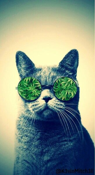 Weed cat