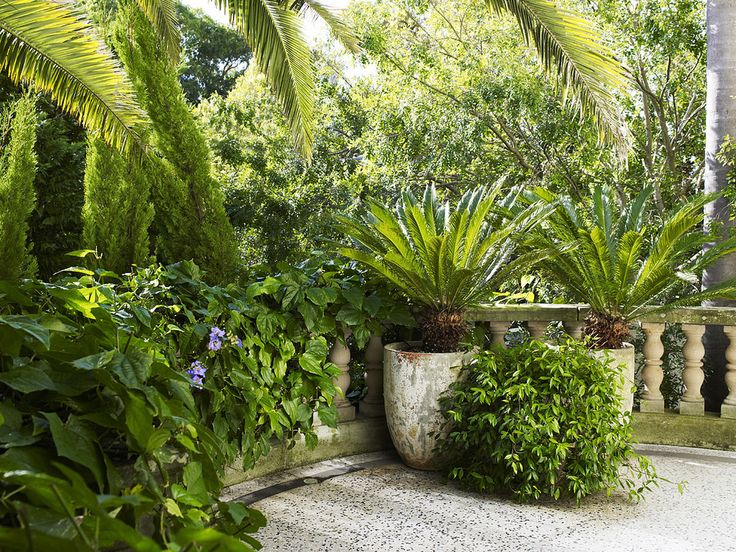 58 best images about garden cycads on pinterest for Cycas landscape design