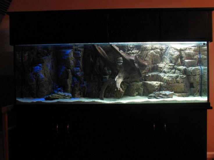 8 best fish tank ideas images on pinterest fish for Fish tank background ideas