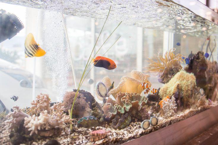 水換え不要の水槽で海水魚飼育が簡単に!海と同じ微生物連鎖循環によって、淡水魚水槽も海水魚水槽も水換えが不要になりました。そんな世界初の特許技術を提供しています。