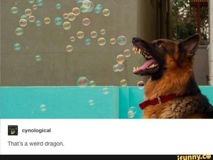 Bork Bork No Doggo   tumblr, true, doggo, bork - Is a first dog or doggo counts…