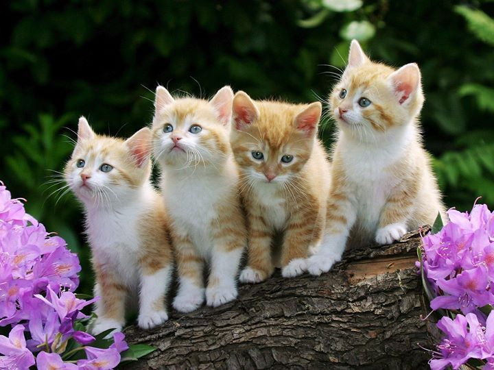 Interesting Facts About Cats Do You Know That Cats Have About 130000 Hairs Per Square Inch 20155 Hairs Per Squ Kittens Cutest Cute Cats And Kittens Baby Cats