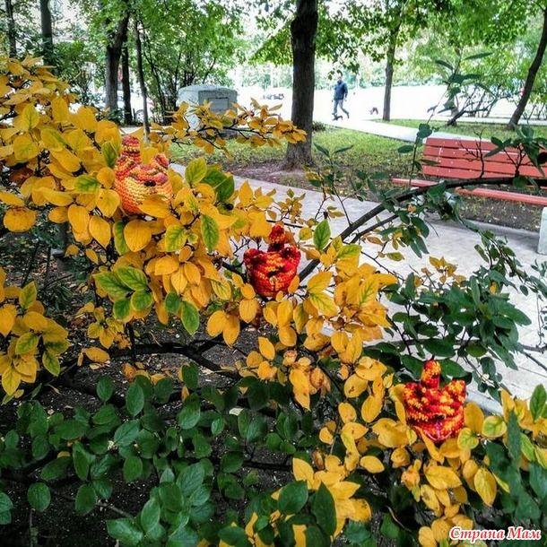 Сквер, осень, первые жёлтые листья! Осенние коты .