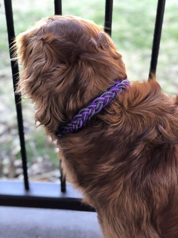 Adjustable Paracord Dog Collar 1 Inch Or 3 4 Inch Width Buckle