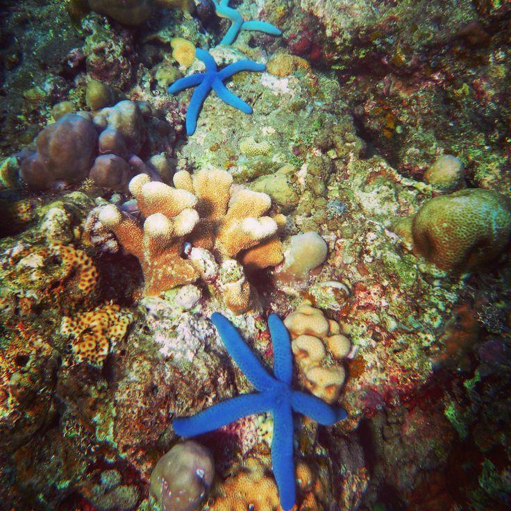 Bali - Amed #blue #starfish