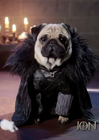 "Jon Snow and all the other ""Game of Thrones"" characters ... as pugs → http://youtu.be/2EoQCtPR2-I"