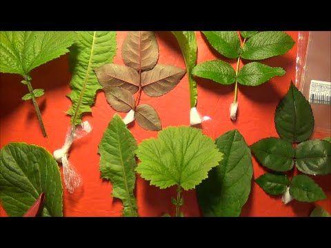 МК Молды из силикона в домашних условиях. Часть 1 - YouTube