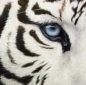 white tiger 1