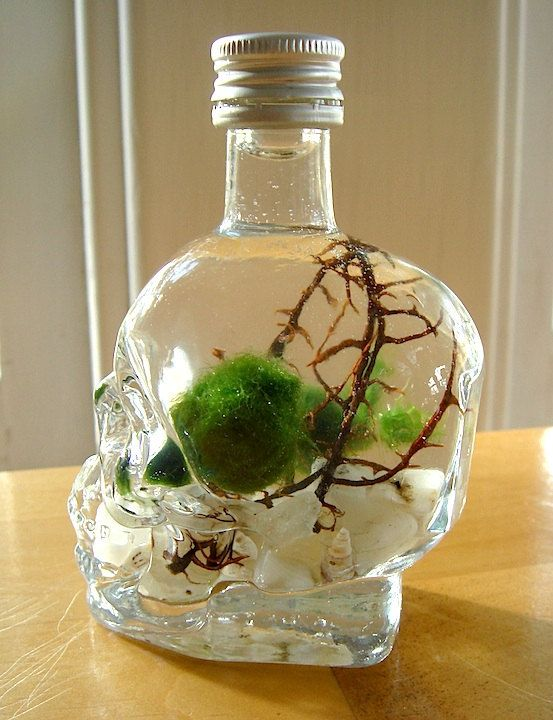 Tiny Skull Bottle with Nano Marimo Balls in Unique by MyZen