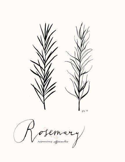 Rosemary 8.5x11 -Culinary Art- Collection. $22.00, via Etsy.