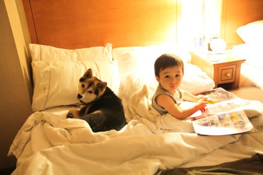 Child and dog in bed