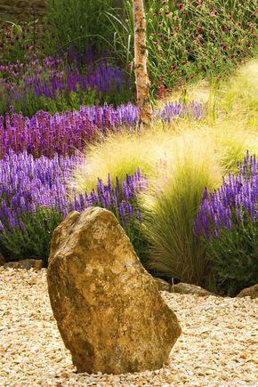 Graminée Stipa tenuifolia-cheveux d'ange, en plein soleil. Associez-les à ces Salvia. Le contraste sera saisissant !