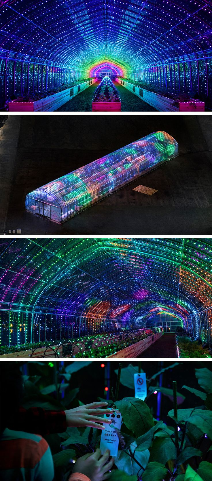 Plant Party: A Greenhouse in Tokyo Bursts Into a Dazzling Light Show When You Touch the Plants Inside