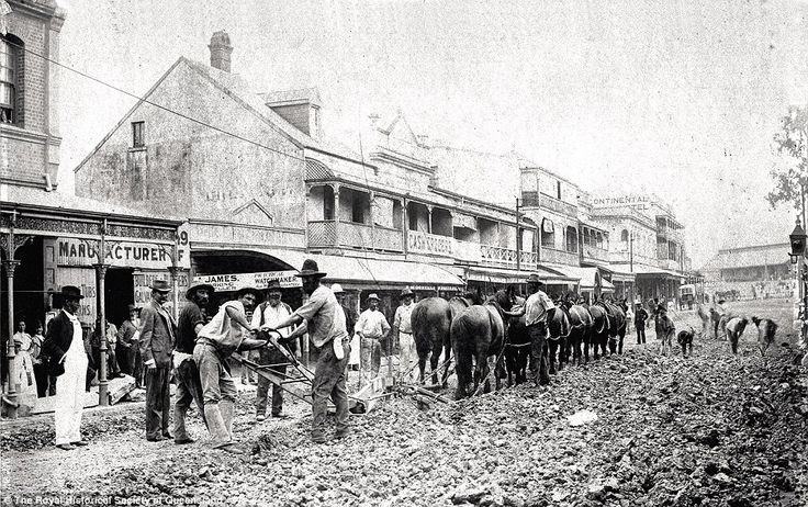 Ploughing George Street towards Roma Street, 1890s: Chamberlain and Wyllie tendered to put down wooden blocking for the length of Queen Street and George Street from Queen to Roma Streets. The contract was too big for them and George Charles Willcocks took over. Two plough teams were used each operating 12 powerful horses. Four drivers were required and three men to hold and guide the plough