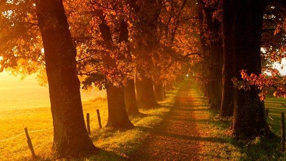 Sonbahar #wallpaper #sonbahar #autumn #yol #orman #forest