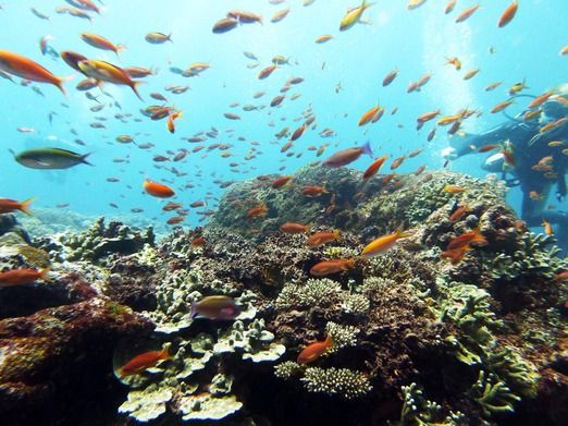 Healthy coral reefs: Situated around 20-minutes away by boat from Sanur, Nusa Lembongan offers healthy coral reefs as we...