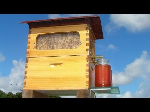 Cette ruche révolutionnaire permet de récolter le miel sans perturber les abeilles   Buzzly