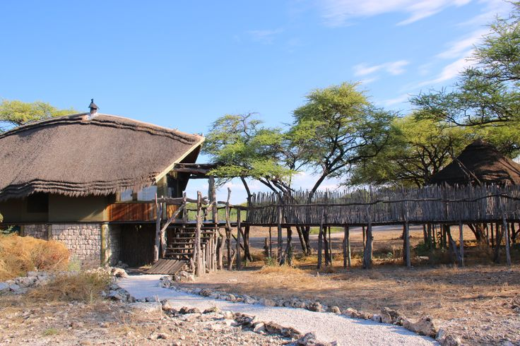 Walking into the camp is a treat, you never know what you will see at the waterhole.