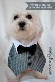 Resultado de imagen para ropa para perros pequeños