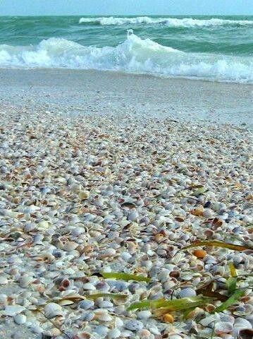 Treasure Island FL