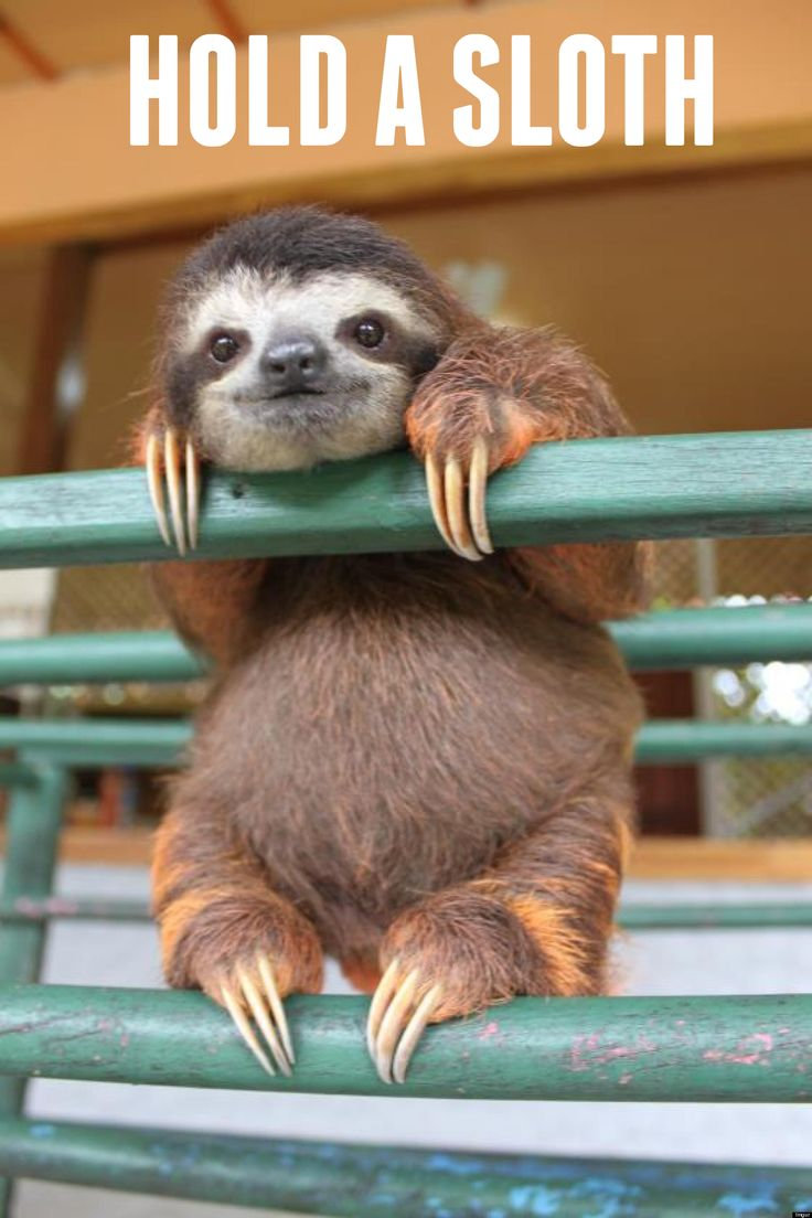 Hold a Sloth!