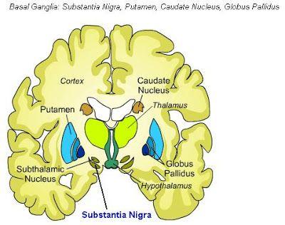 Science, Natural Phenomena & Medicine: Substantia Nigra