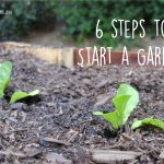 Earth Month with the Gerson Institute: 6 Steps to Start a Garden