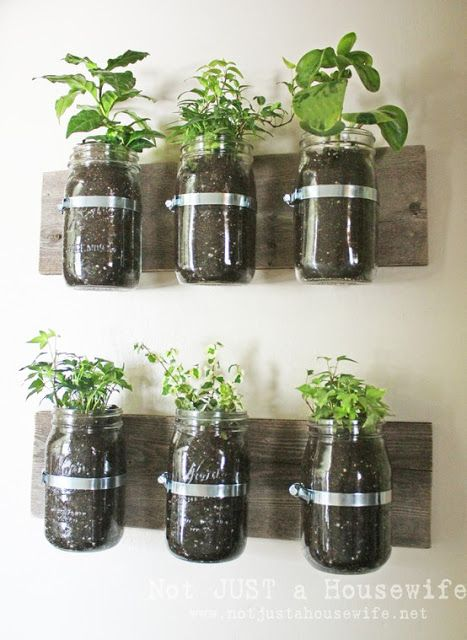 Mason jar gardening for growing kitchen herbs.