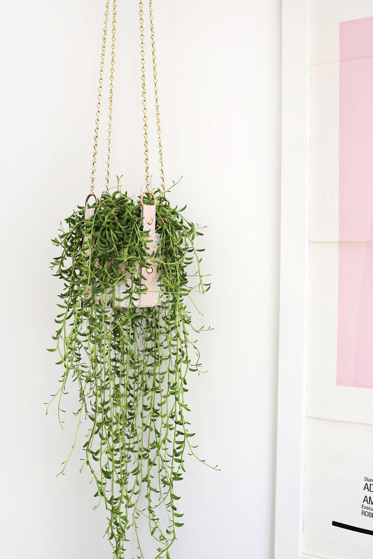 Hanging Plants Wall