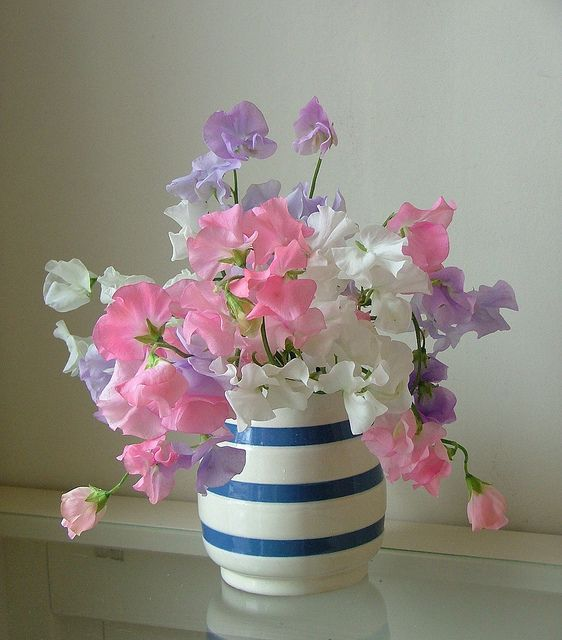 """Here are sweet peas, on tiptoe for a flight, With wings of gentle flush o'er delicate white."" Keats"