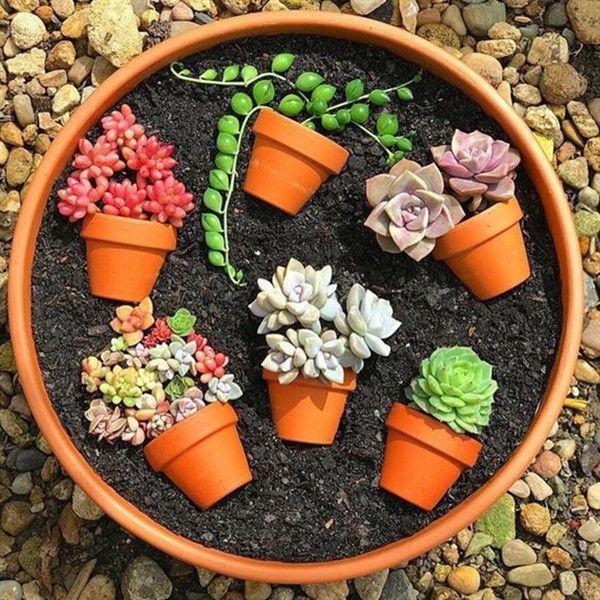 Charming Succulent Pot In A Pot Ideas Balcony Decoration Ideas In Every Unique Detail Succulent Gardening Plants Succulents Diy
