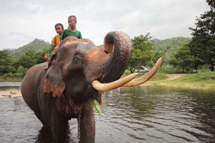 Ejemplar de una cría de elefante asiático en Tailandia.
