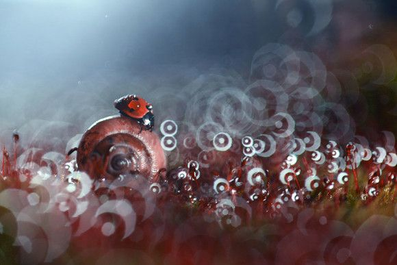 http://www.themostamazingplaces.com/the-mysterious-life-of-bugs-and-snails-by-vadim-trunov/