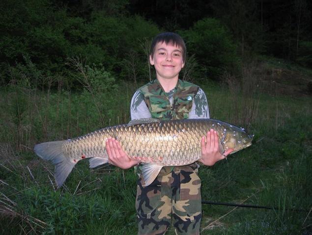 Grass carp strahomer lake fish trophy pinterest for Grass carp fish
