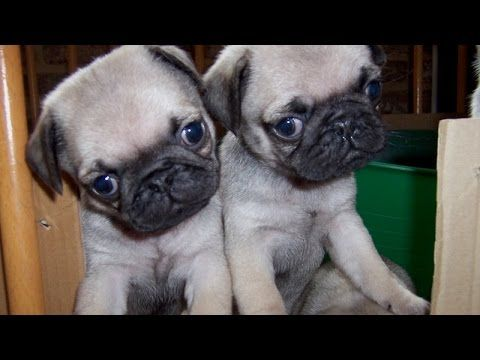 Top 10 cute puppy videos compilation