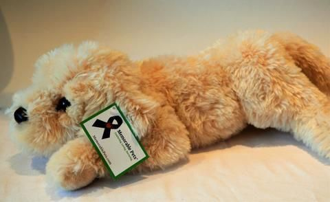 Reclining Yellow Labradoodle For People With Alzheimer S And
