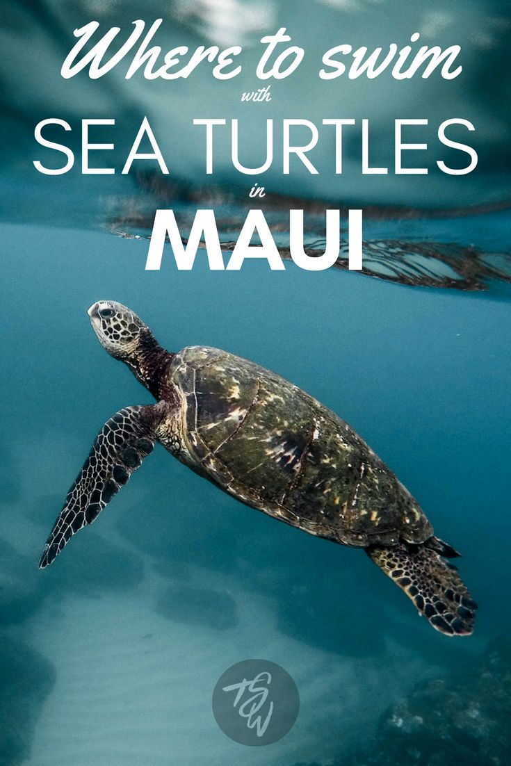 A kayaking excursion with Maui Kayak Adventures is the perfect way to have close encounters with gorgeous sea turtles on this Hawaiian island.