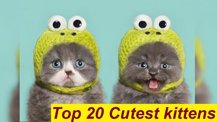 Top 20 Cutest Kittens Video Ever in The World – Cutest Cats Compilation ...