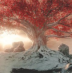 game of thrones weirwood tree - Google Search