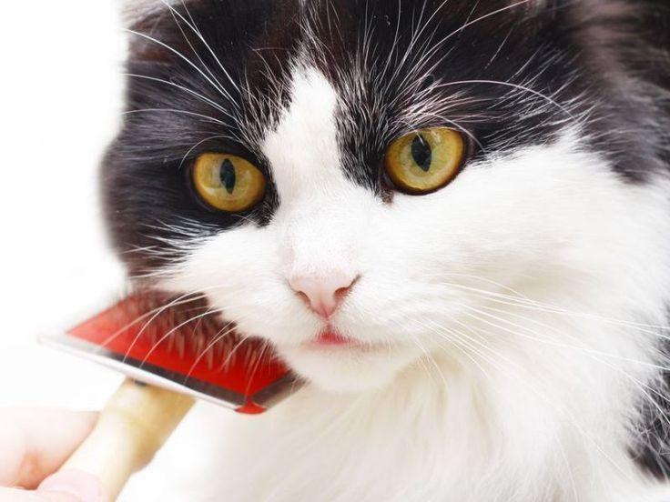 So gewöhnen Sie Ihre Katze ans Kämmen und Bürsten