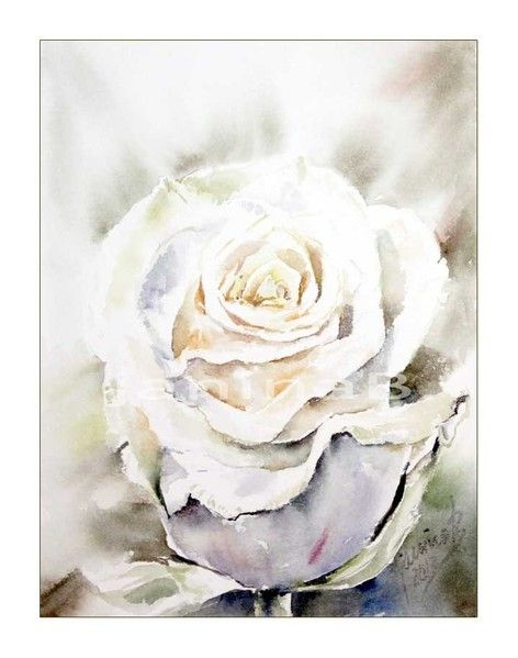 weisse rose aquarell 15x20cm watercolor pinterest logs and watercolor. Black Bedroom Furniture Sets. Home Design Ideas