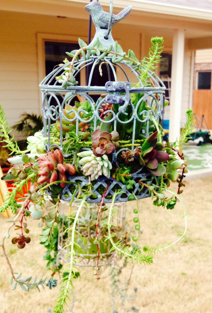 Another bird cage headed to the garden show- bird cage- succulents