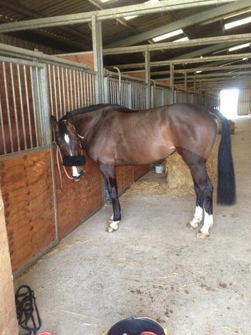 propose demi-pension (250827) | Acheter ce cheval | Equirodi France