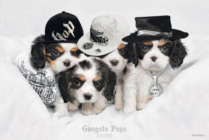 Gangsta Pups #puppy #dog #poster http://www.stuffpool.com/