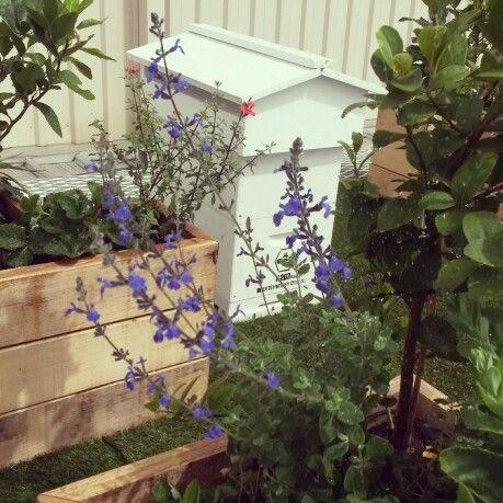 Rooftop #Bees & #Plants in Sth Yarra #Melbourne #Urban #Beekeeping
